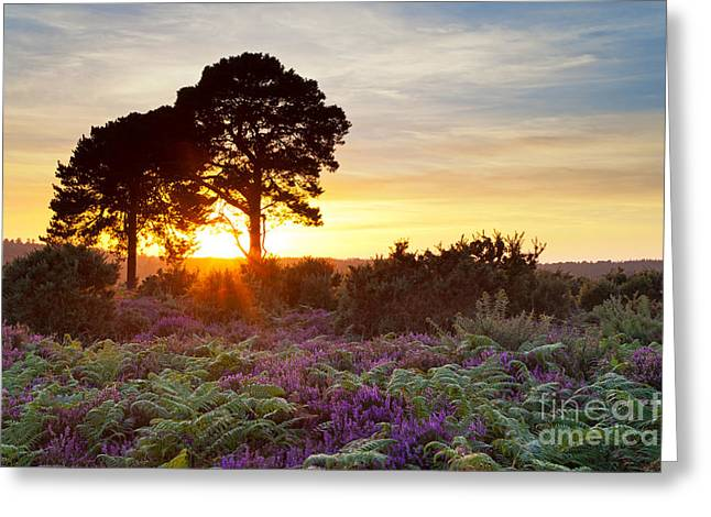 Braken Greeting Cards - Two trees in the New Forest at sunset Greeting Card by Richard Thomas