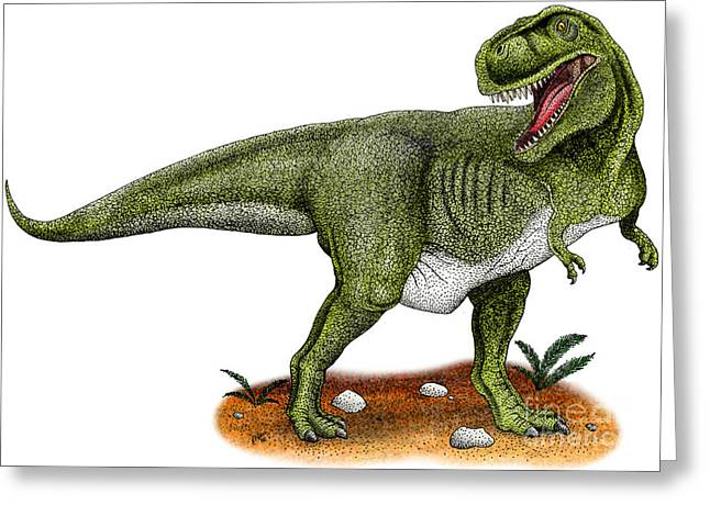 Dinosaurs Drawings Greeting Cards - Tyrannosaurus Rex Greeting Card by Roger Hall and Photo Researchers
