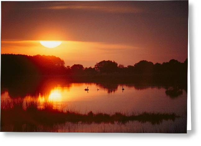 Sunset Scenes. Greeting Cards - Untitled Greeting Card by Al Petteway