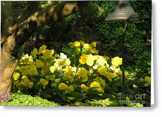 Yello Greeting Cards - Untitled  Greeting Card by Diane  Greco-Lesser