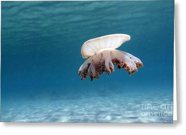 Blue Jellyfish Greeting Cards - Upside Down Jellyfish In Caribbean Sea Greeting Card by Karen Doody