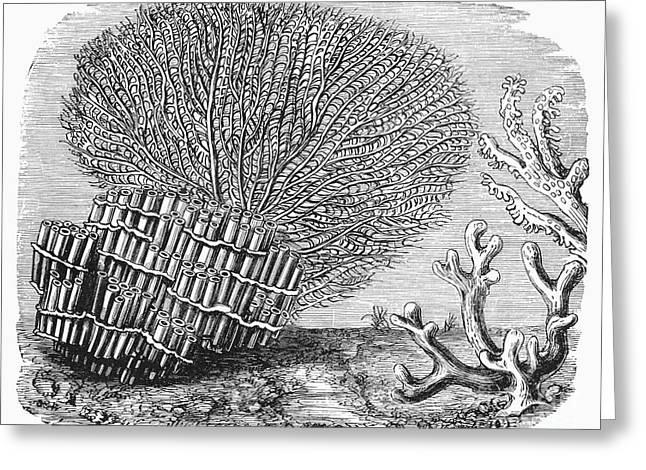 Aquatic Greeting Cards - Varieties Of Coral Greeting Card by Granger