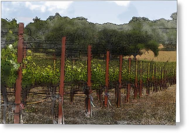 Napa Valley Digital Greeting Cards - Vineyard in Summer Greeting Card by Brandon Bourdages