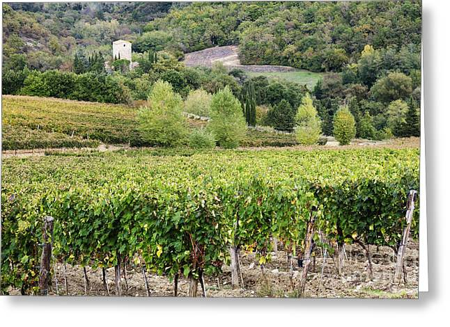 Chianti Hills Photographs Greeting Cards - Vineyard Greeting Card by Jeremy Woodhouse