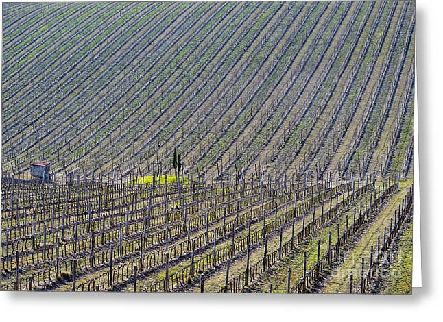 Chianti Greeting Cards - Vineyard Greeting Card by Mats Silvan