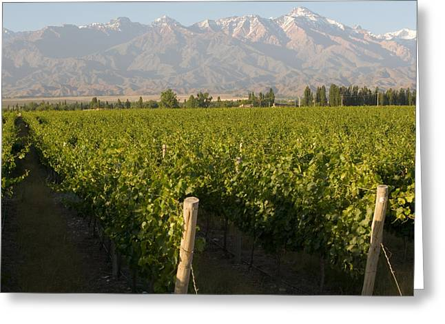 Malbec Photographs Greeting Cards - Vineyards In The Mendoza Valley Greeting Card by Michael S. Lewis