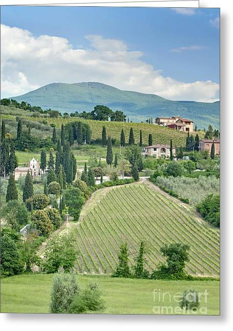 Tuscan Hills Greeting Cards - Vineyards on a Hillside Greeting Card by Rob Tilley