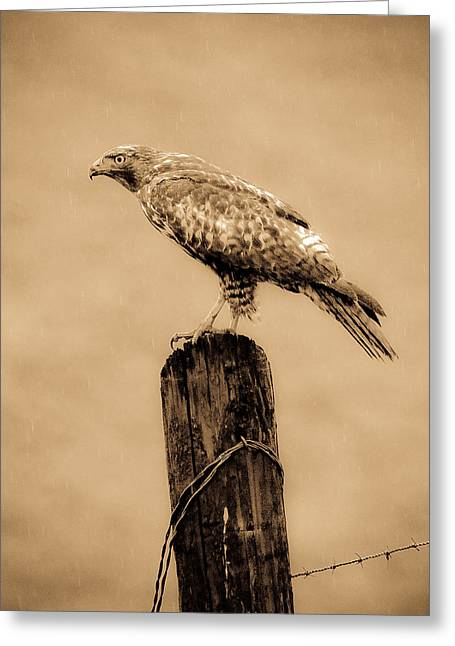 Old Western Photos Greeting Cards - Vintage Hawk Greeting Card by Steve McKinzie