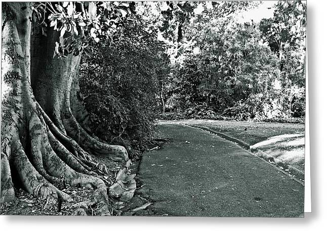 """""""fig Trees"""" Greeting Cards - Walk in the Park Greeting Card by Douglas Barnard"""