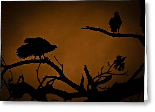 Vulture Silhouettes Greeting Cards - Watcher Greeting Card by Kim Henderson
