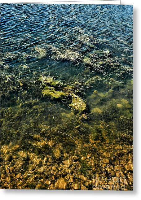 Alga Greeting Cards - Water Greeting Card by HD Connelly