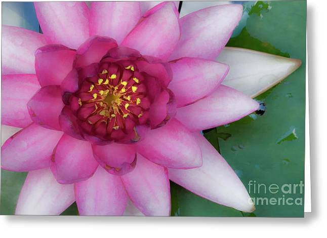 Water Lilly Digital Greeting Cards - Water Lilly - D007668c Greeting Card by Daniel Dempster