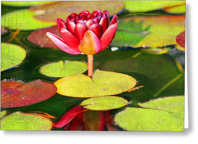 Water Lily Greeting Card by Darren Fisher