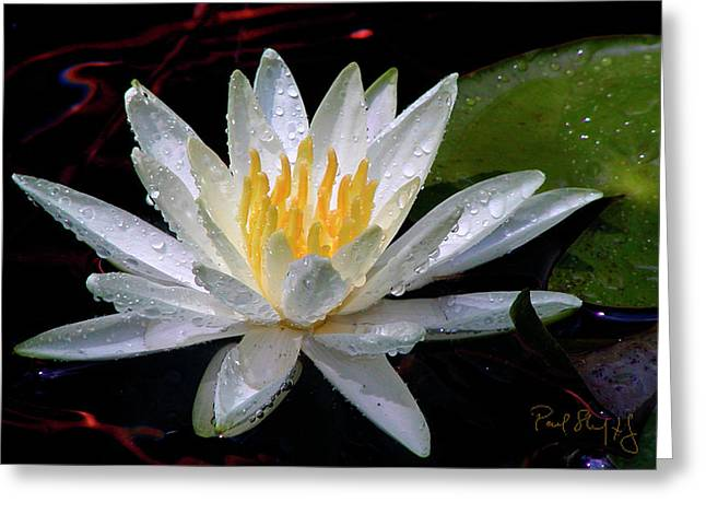 Digital Image Greeting Cards - Water Lily Greeting Card by Paul Shefferly