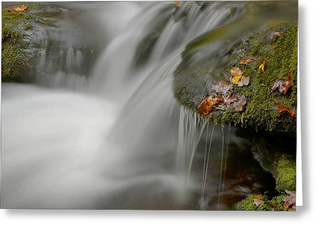 Stokes State Forest Greeting Cards - Water Movement Detail 20 Greeting Card by Stephen  Vecchiotti