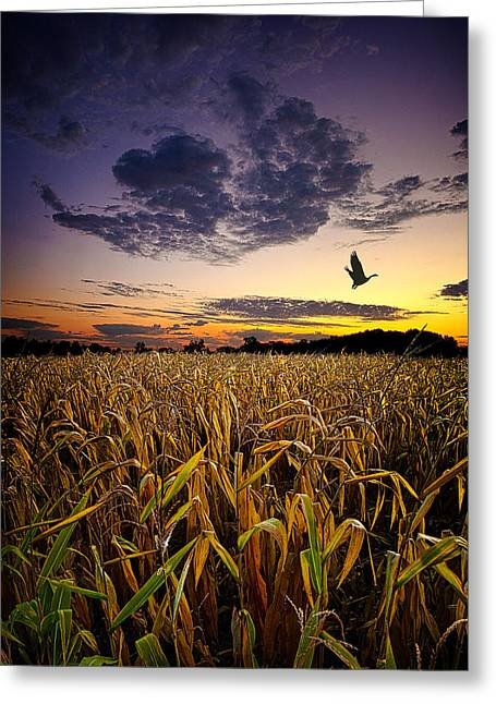 Migrate Greeting Cards - Way Stop Greeting Card by Phil Koch