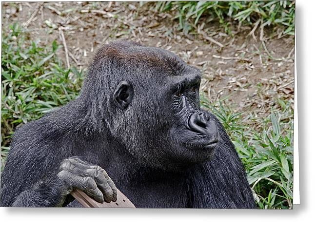 Ape. Great Ape Greeting Cards - Western Lowland Gorilla Greeting Card by Brendan Reals