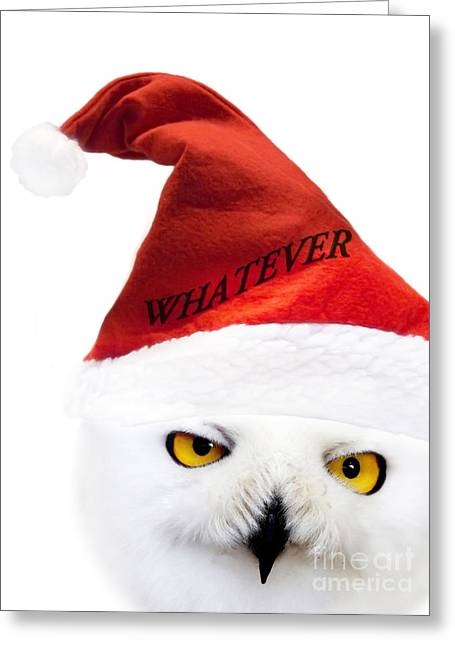 Cute Digital Art Greeting Cards - Whatever Greeting Card by Photodream Art