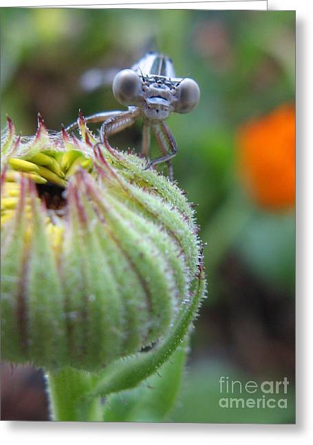 Macro Dragonfly Picture Greeting Cards - Whats Up Greeting Card by Tina Marie