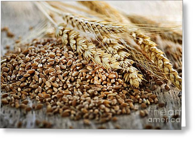 Wholewheat Greeting Cards - Wheat ears and grain Greeting Card by Elena Elisseeva