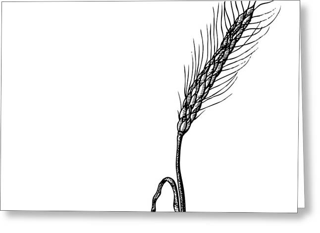 Organic Drawings Greeting Cards - Wheat Greeting Card by Karl Addison