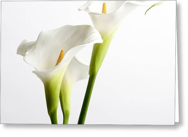 Variety Photos Greeting Cards - White arums Greeting Card by Bernard Jaubert
