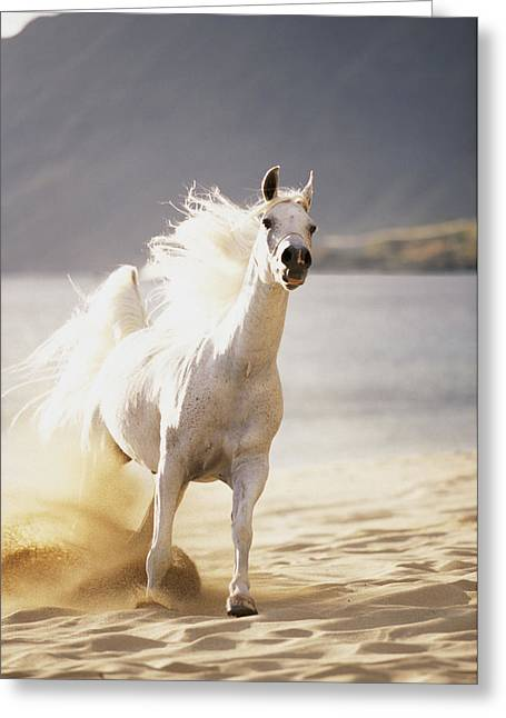 Vince Greeting Cards - White Horse On The Beach Greeting Card by Vince Cavataio - Printscapes