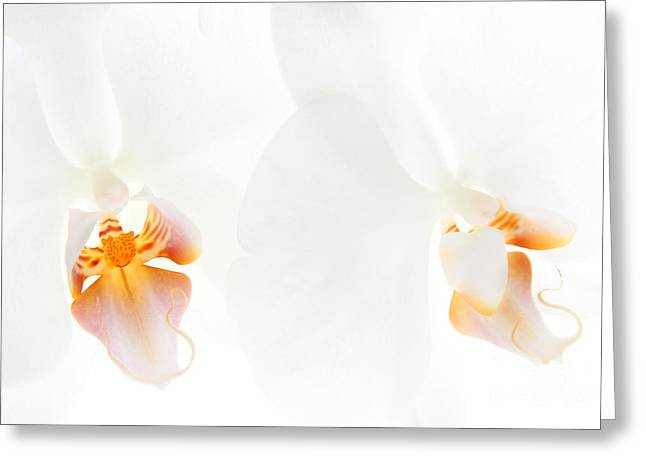 White Orchid Greeting Cards - White Orchids Greeting Card by Ann Garrett