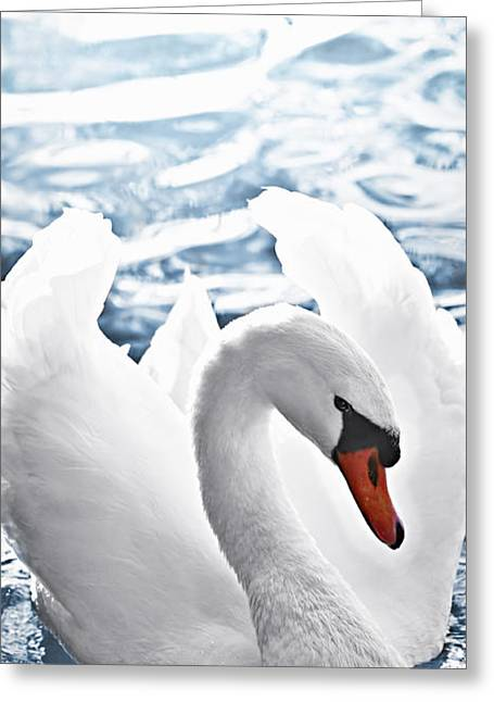 Swans... Photographs Greeting Cards - White swan on water Greeting Card by Elena Elisseeva