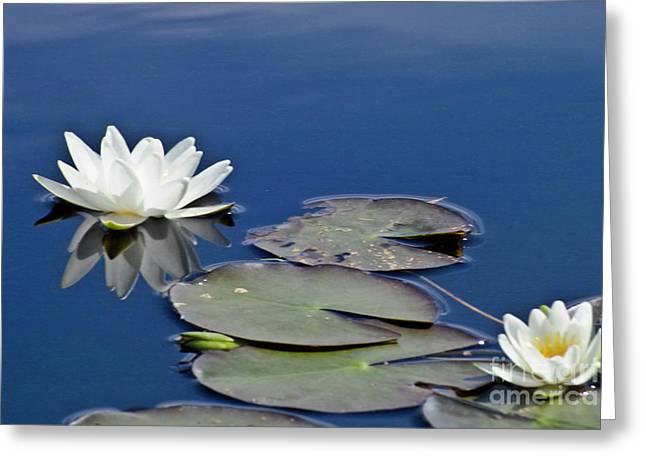 Nymphaea Alba Greeting Cards - White Water Lily Greeting Card by Heiko Koehrer-Wagner