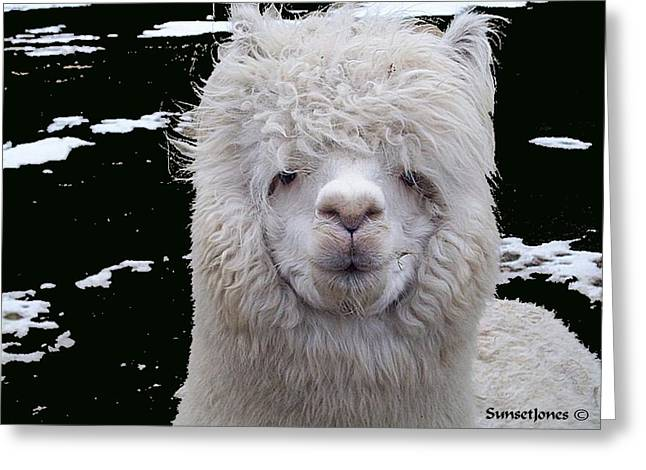 Alpaca Greeting Cards - Wild Life Greeting Card by Robert Orinski