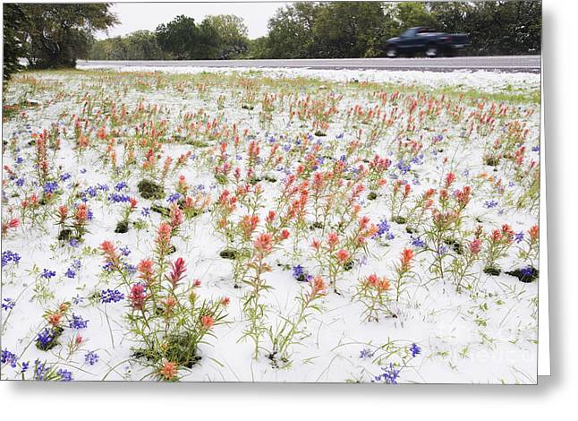 Snow Covered Street Greeting Cards - Wildflowers Blanketed by Late Spring Snowfall Greeting Card by Jeremy Woodhouse