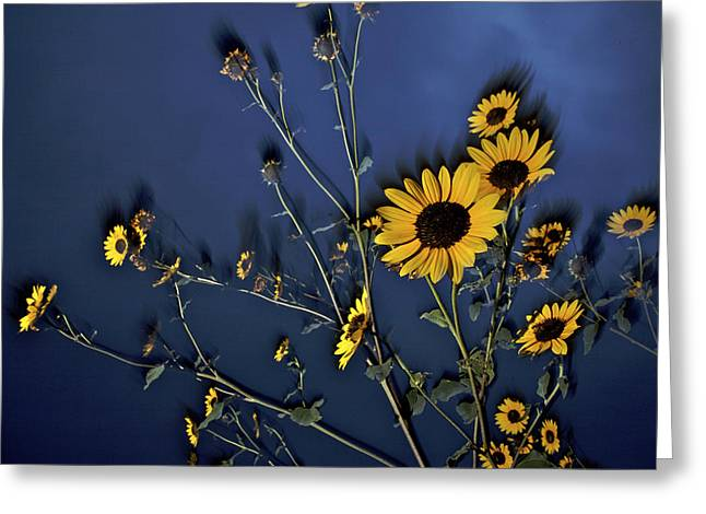 Tallgrass Prairie National Preserve Greeting Cards - Wildflowers Blooming On The Kansas Greeting Card by Jim Richardson