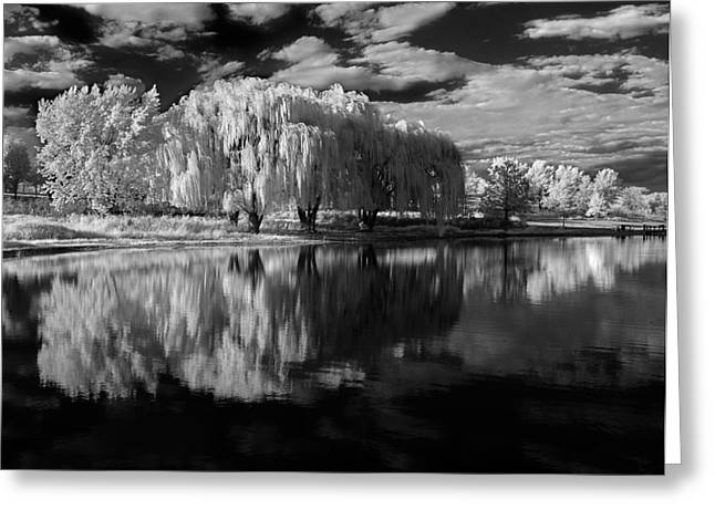 Willow Lake Greeting Cards - Willow Trees Greeting Card by Bob Nardi