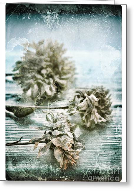 Edge Greeting Cards - Windowsill at 14 Greeting Card by HD Connelly