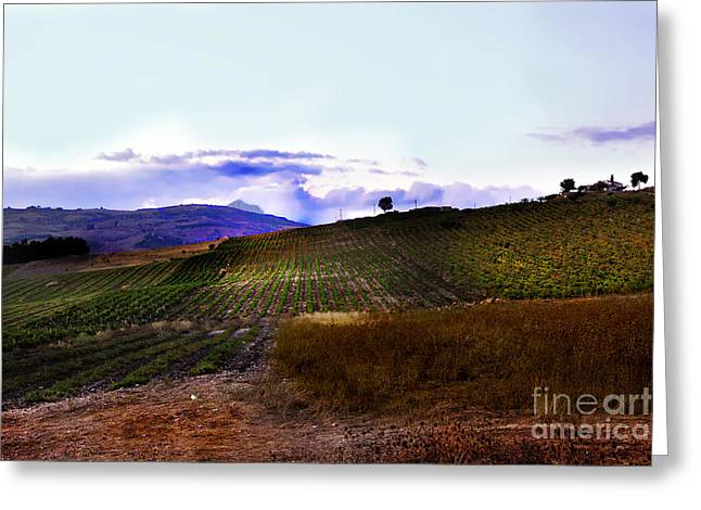 Wine Vineyard In Sicily Greeting Card by Madeline Ellis