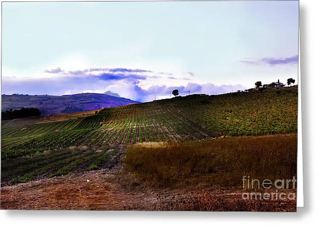 Wine Vineyard in Sicily Greeting Card by Madeline Ellis