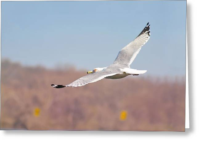 Wingspan Greeting Card by Bill Cannon