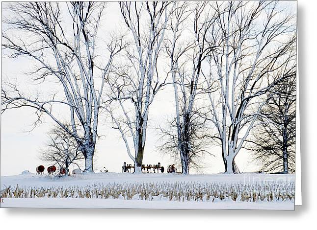 Rural Snow Scenes Greeting Cards - Winter Calm Greeting Card by Christine Belt