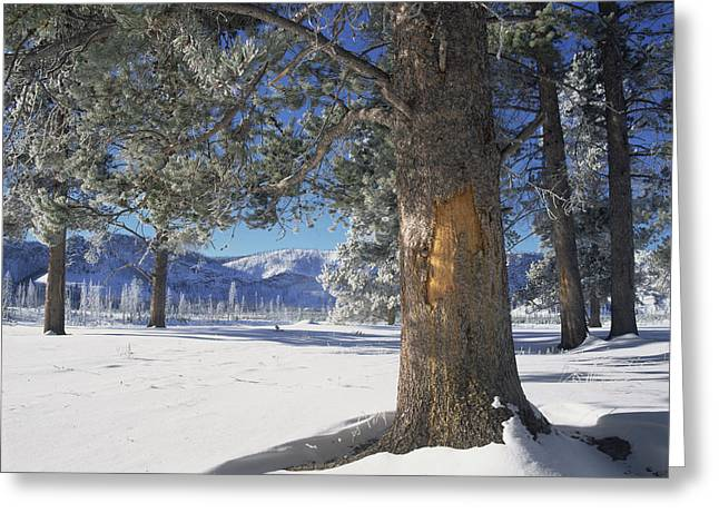Winter In Yellowstone National Park Greeting Card by Tim Fitzharris