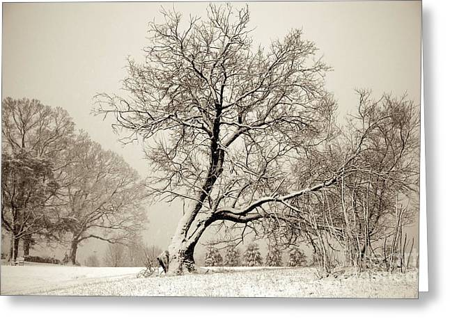 Winter Park Greeting Cards - Winter Park  Greeting Card by Sean Cupp