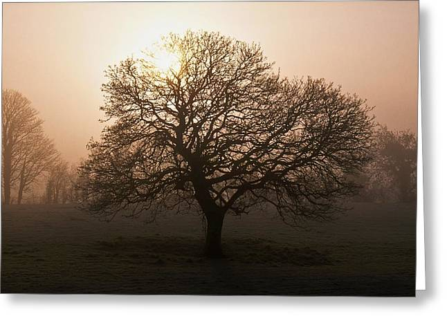 Foggy Day Greeting Cards - Winter Tree On A Frosty Morning, County Greeting Card by Gareth McCormack