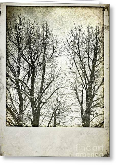 Wintry Photographs Greeting Cards - Winter trees Greeting Card by Silvia Ganora