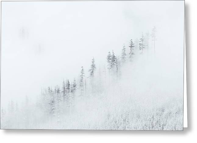 Best Sellers -  - Winter Storm Greeting Cards - Winter Veil Greeting Card by Mike  Dawson