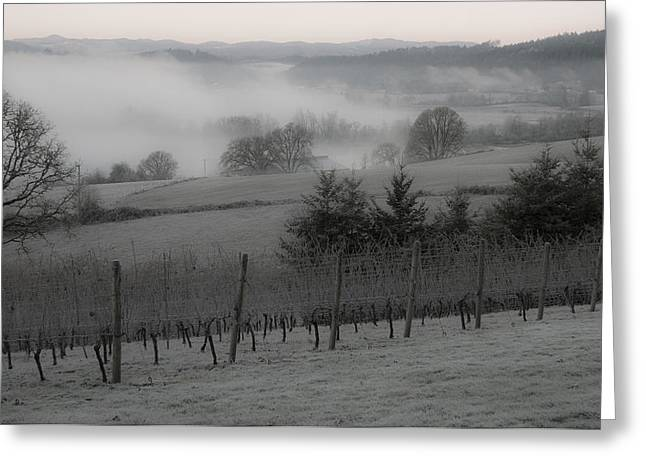 Winter Vineyard Greeting Card by Jean Noren