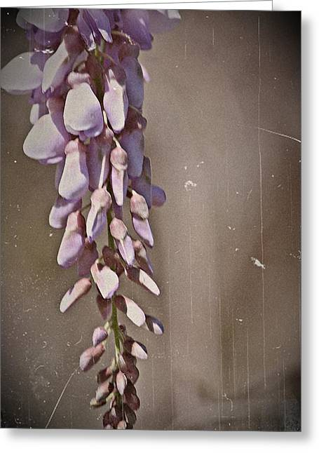 Kayecee Spain Greeting Cards - Wisteria Dreams- Fine Art Greeting Card by KayeCee Spain