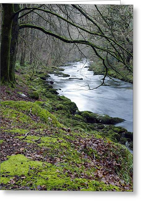 Rockford Greeting Cards - Woodland River Greeting Card by Dr Keith Wheeler