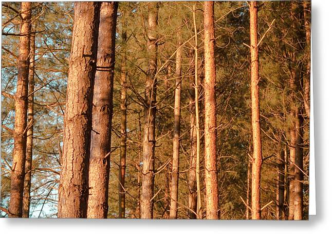 Woodland Greeting Card by Tom Gowanlock