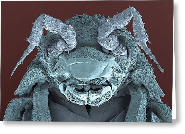 Cut-outs Greeting Cards - Woodlouse Head, Sem Greeting Card by Steve Gschmeissner