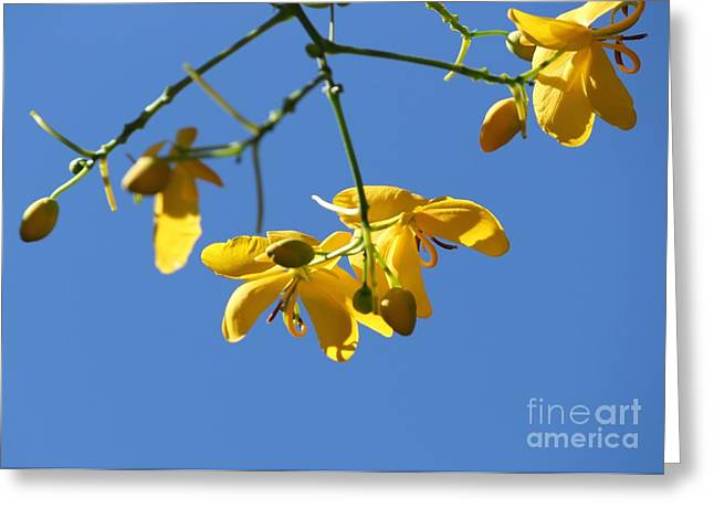 Flowers Against The Sky Greeting Cards - Yellow and Blue Greeting Card by Theresa Willingham